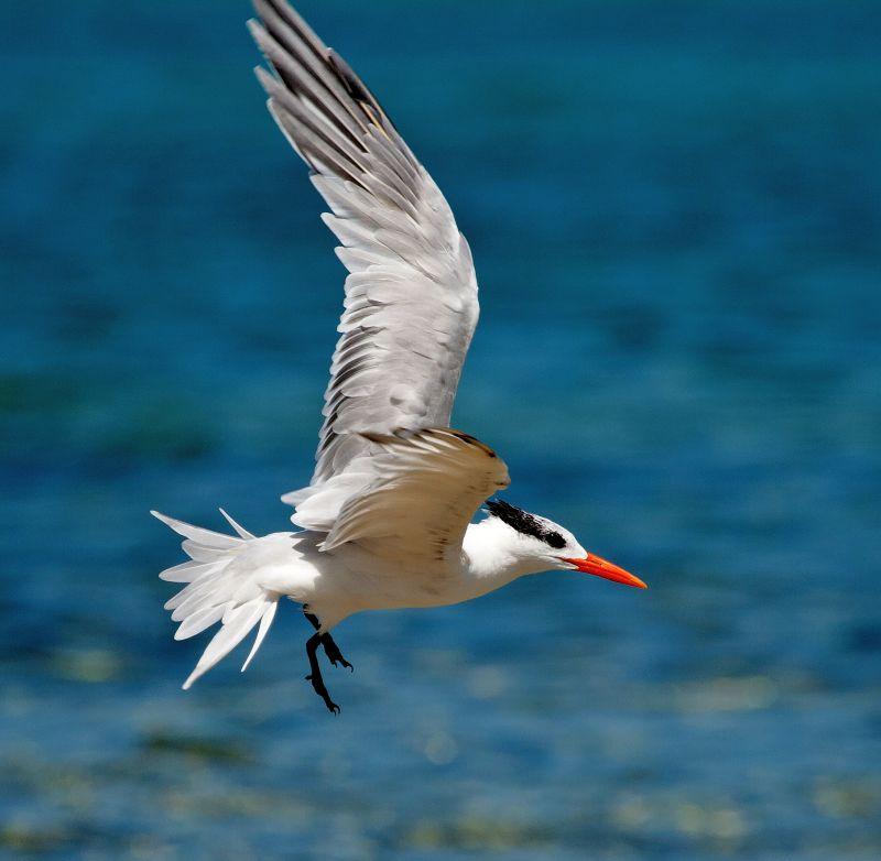 Eco adventures with Turneffe Flats - Birding