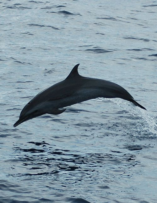Dolphin tours - Eco adventures