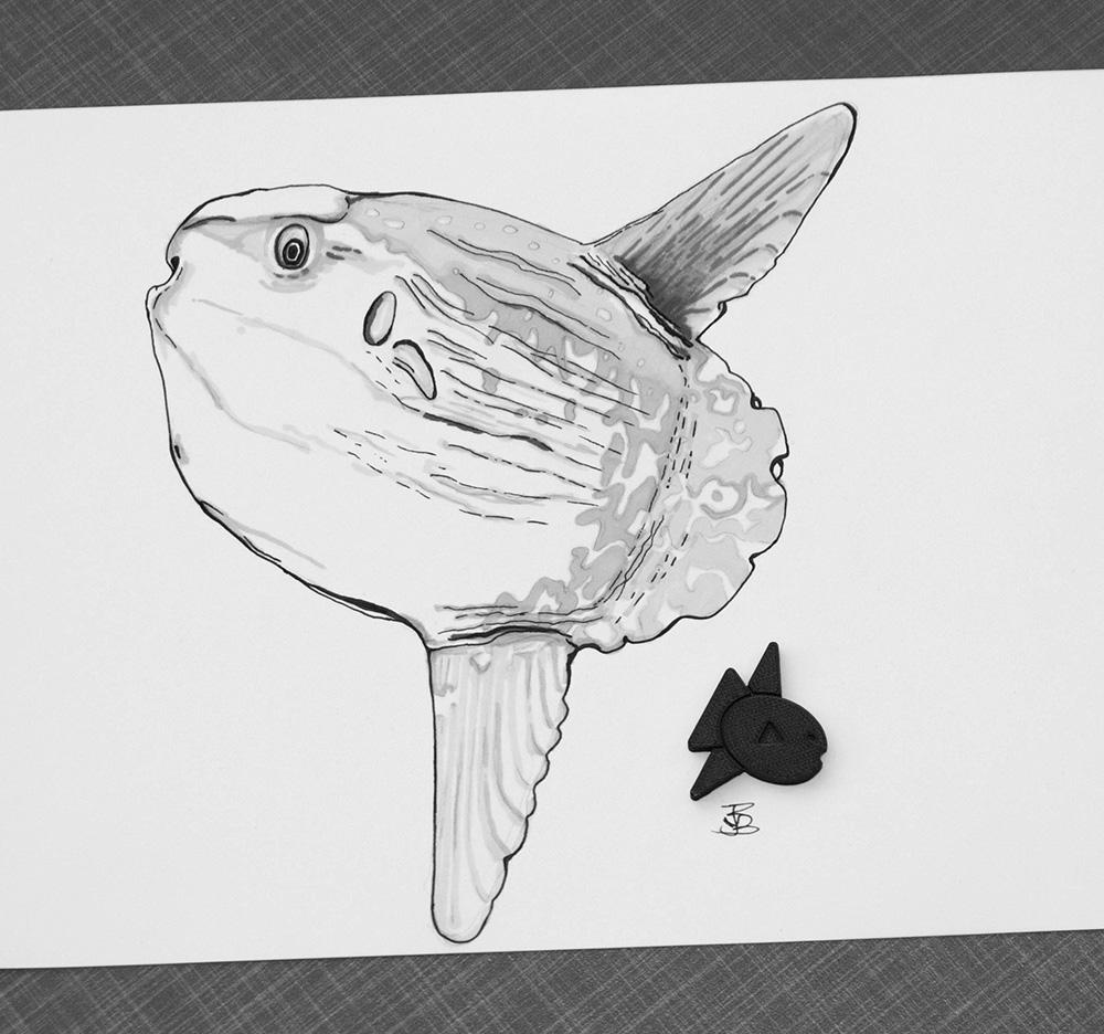 Mola Mola - Sunfish