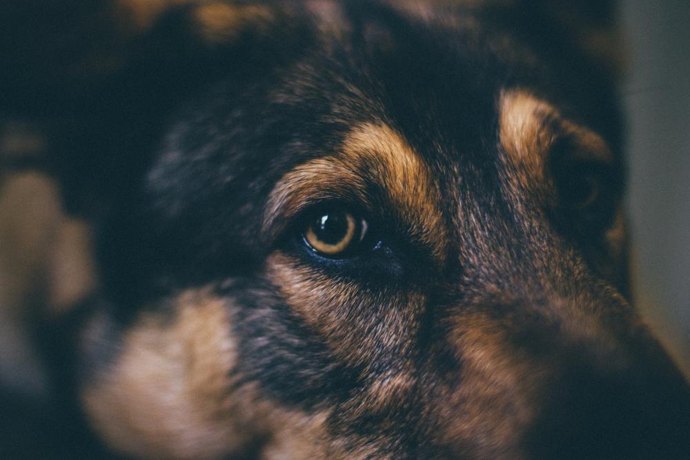 Otis Eye Closeup (1 of 1).jpg