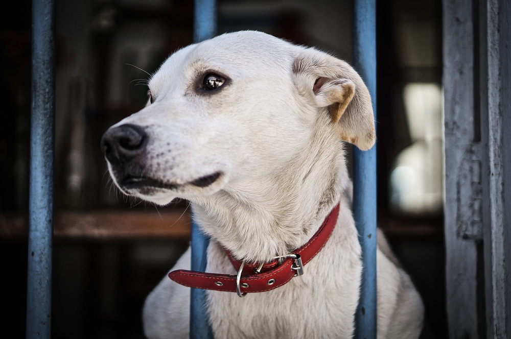 Dog Valpo.jpg