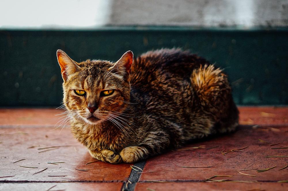 Cat BA.jpg