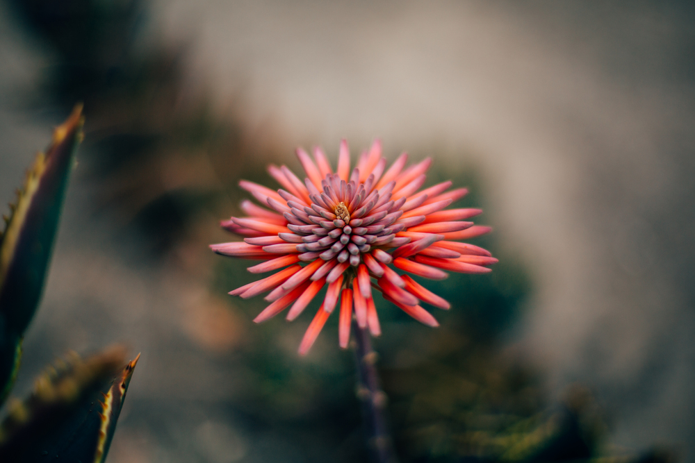 Flower Pink.jpg