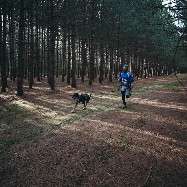 🐕 + 🏃 + 🎽 + 🏞 = 🏅Look out for Canicross an up-and-coming interspecies team sport! #healthypethealthyyou #canicross #thisaintequestrian