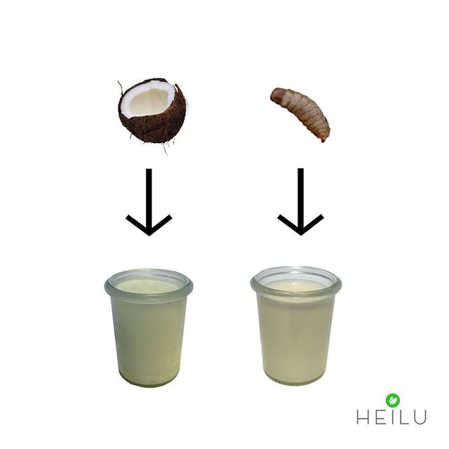 Same same... but different! #onetasteslikecoconut #coconutoil #heilubutter