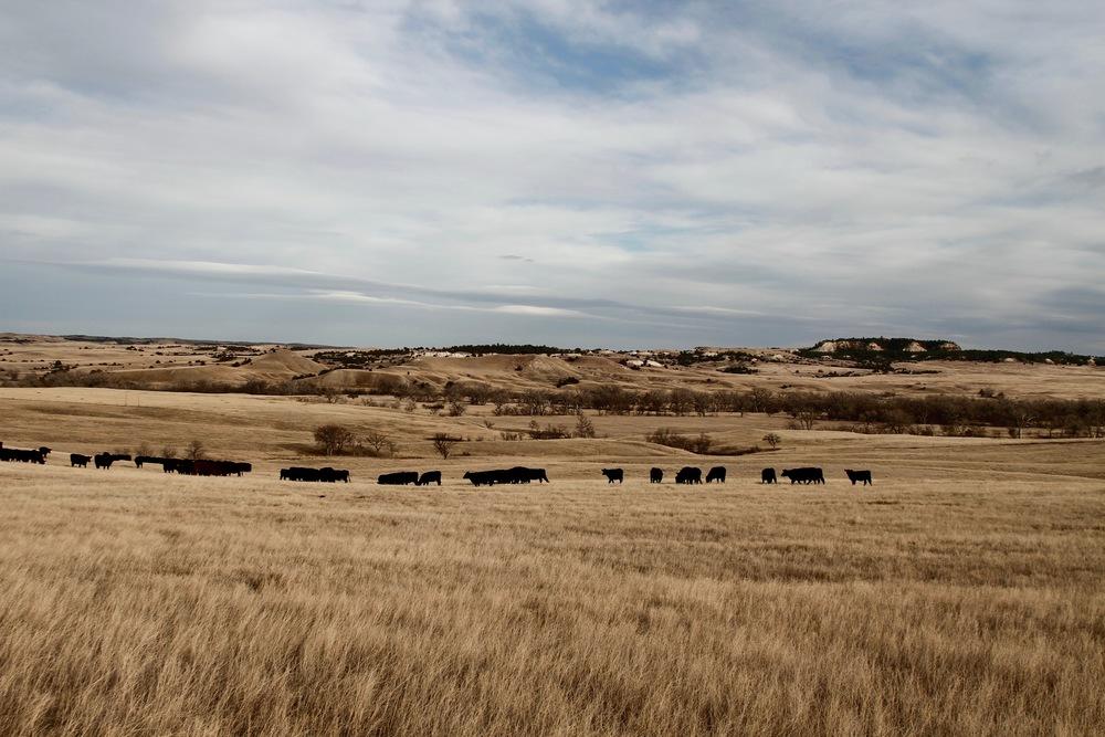 Box L Ranch - September 2011
