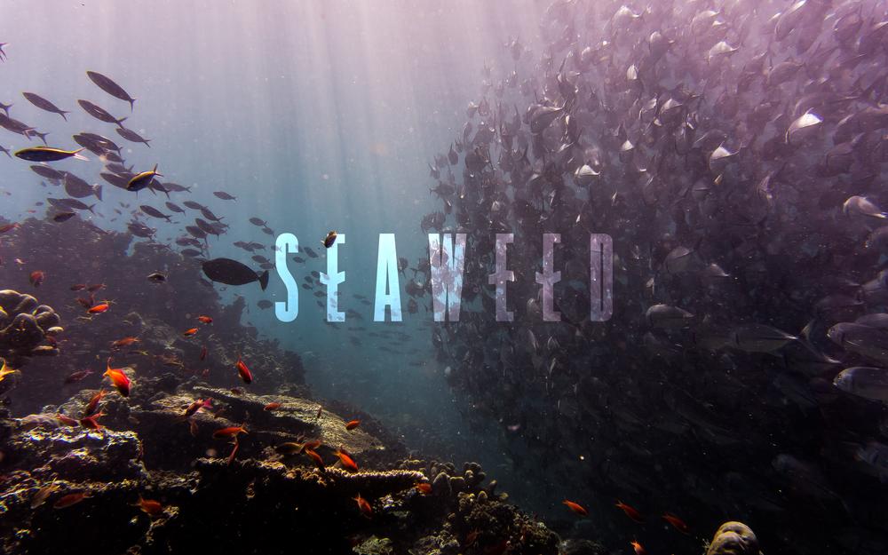 Seaweed Logo | Trout + Taylor www.troutandtaylor.com