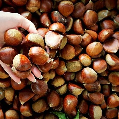 "🌰 We're nuts for CHESTNUTS! Never had one? They are sweet and creamy with a texture similar to a #potato when cooked. #Chestnuts are extremely popular in #Asian countries, often found freshly roasted at street vendors or in #desserts. 💡PRODUCE 101: Look for a store that sells them in bulk and buy the biggest, freshest ones. We recommend asking the #producedepartment to cut few open for you to make sure they're fresh. It's often hard to tell from the outside if they are good. Once opened, avoid any that have mold growing between the skin and flesh and/or have black spots on the flesh. Store them in the refrigerator for up to a week. 🍴We recommend cutting an ""X"" on the rounded side and roasting for 20 min at 400°F. Once slightly cooled, remove the skin and roast again over an open fire (or in a #popcorn popper) for 15 minutes until the flesh is darkened on all sides. We're also a fan of adding them to stuffing! 🦃 ▽ ▽ ▽ #produce #produce101 #grocery #wholefoods #traderjoes #hawaii #luckywelivehawaii #fall #nuts #nutsfornuts #nuts4nuts #recipes #cooking #vegan #vegetarian #healthy #wellnesswednesday #chestnutsroastingonanopenfire #autumn #october"