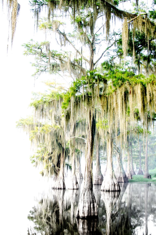 Lake Douglas