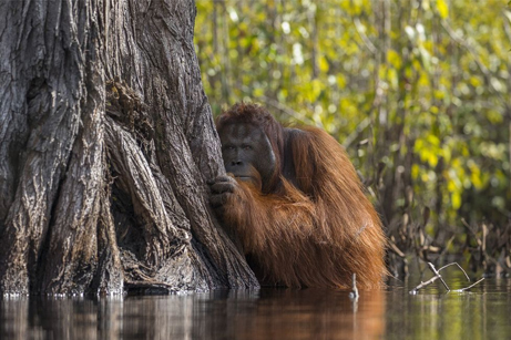 Bask In The Beauty Of Nat Geo's 'Nature Photographer Of The Year' Contest Winners - Digg