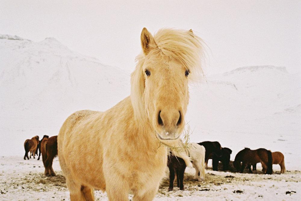 Dane_Iceland_008.jpg