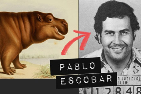 How This Drug Lord Created a Hippo Problem in Colombia - Vox