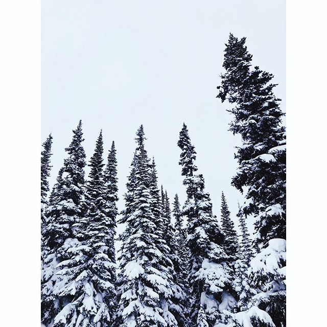 Shake up the snow globe. #pairswellwithanywhere #apresski #raiseacan #saltpointiscalling