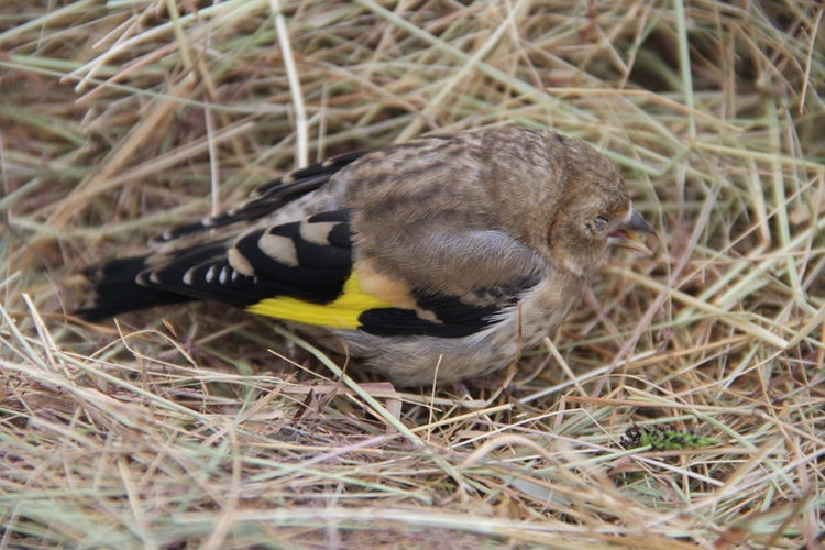 The Goldfinch Life Is Not A Fluke Snow Advertising