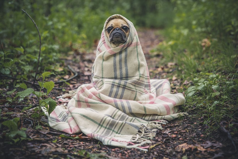 "Nice and honest puppy: ""It's friggin' cold out here, but at least I have this blanket."""