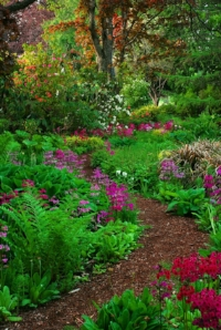 the garden path.jpg
