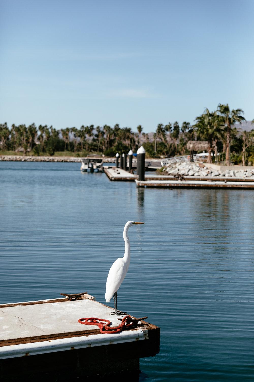Baja California-35.jpg