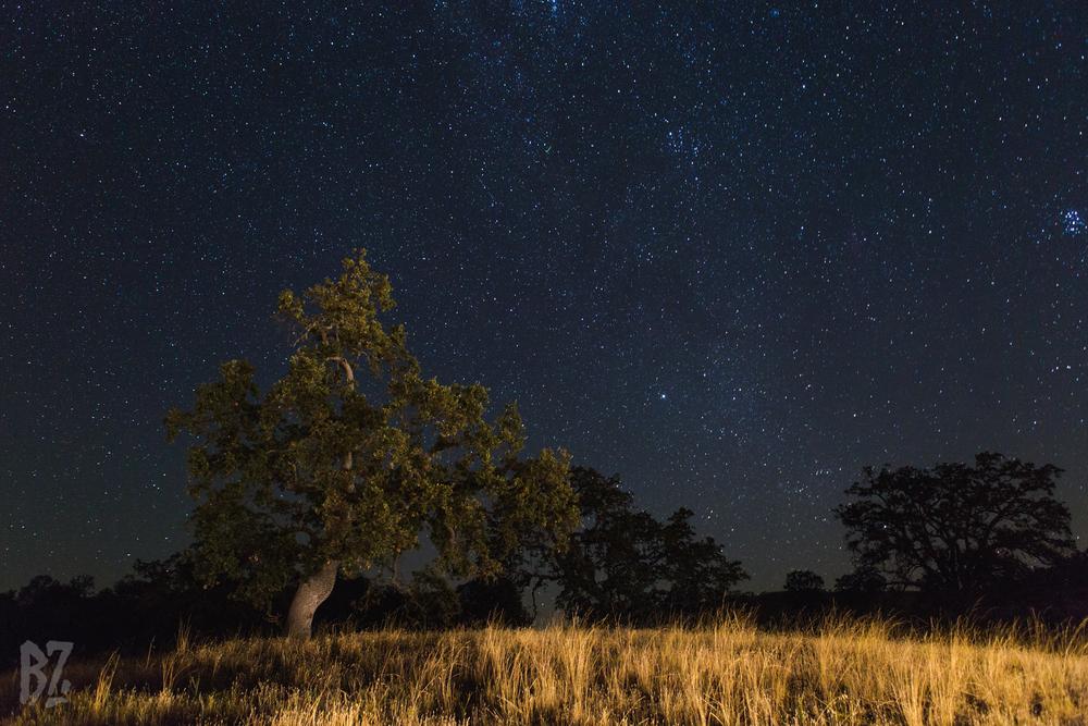 Meteor Shower Night.jpg