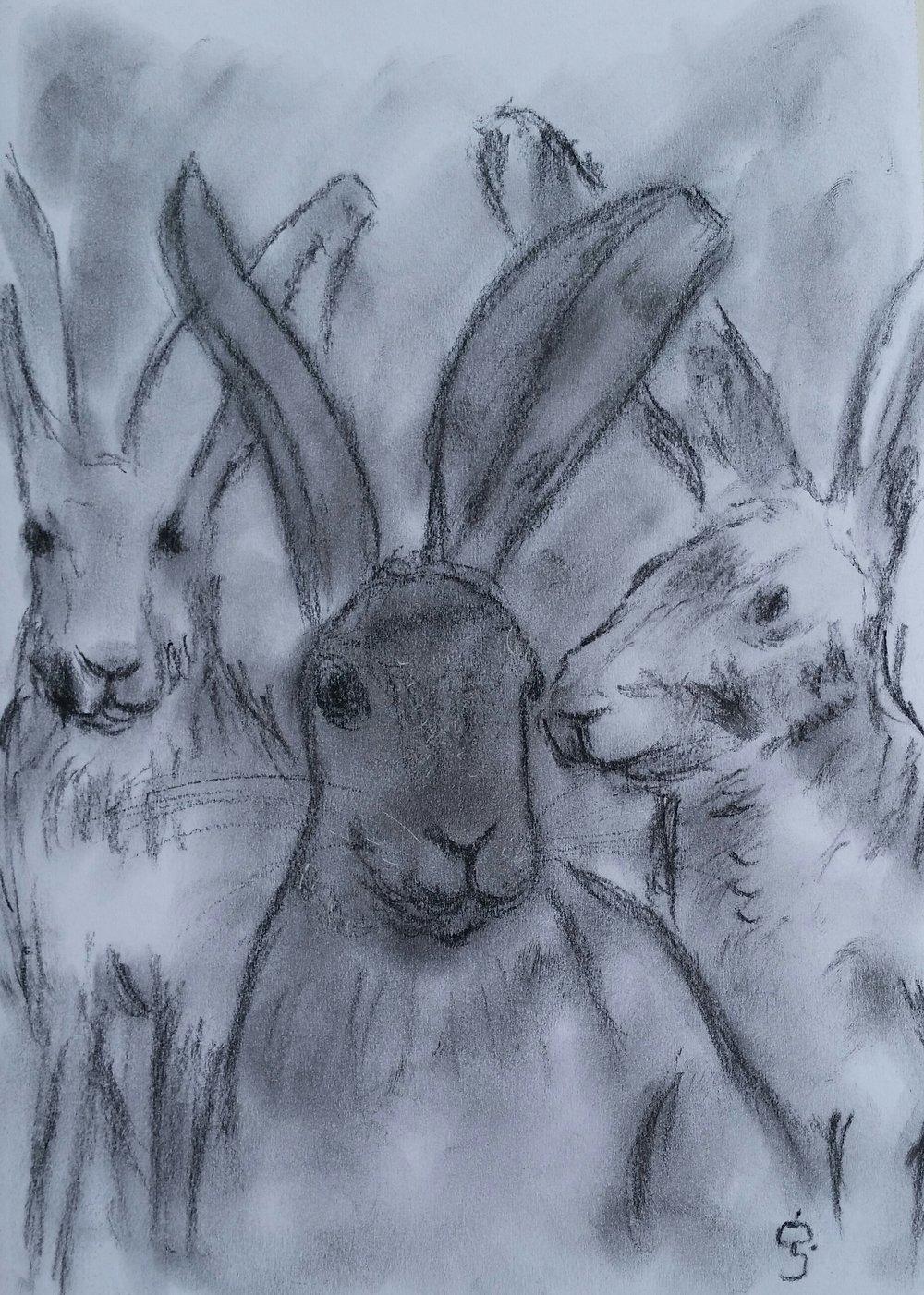 3_hares.jpg-2.jpg