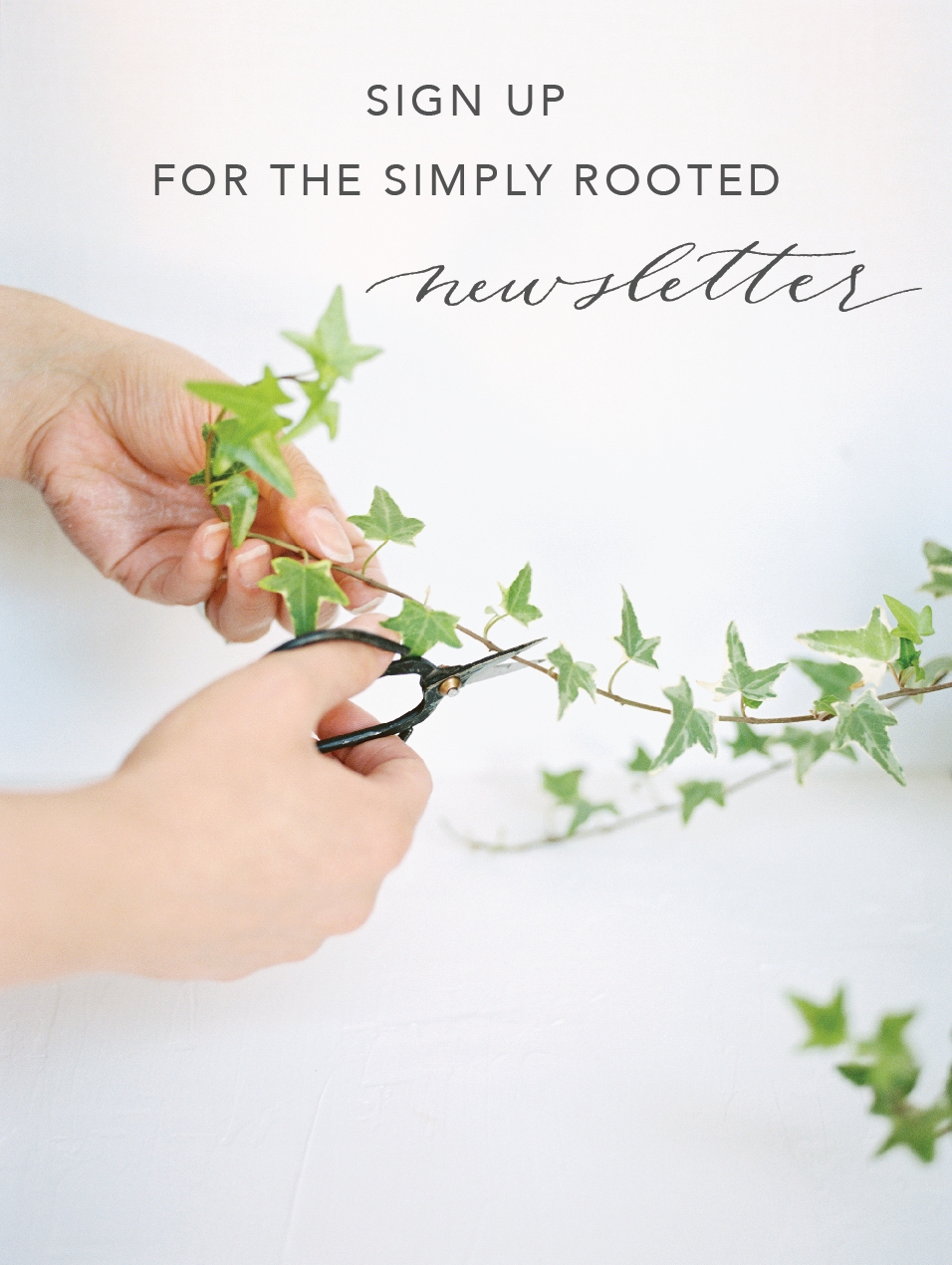 Simply Rooted Newsletter.jpg