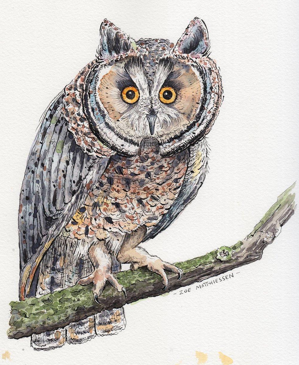 owle.jpg
