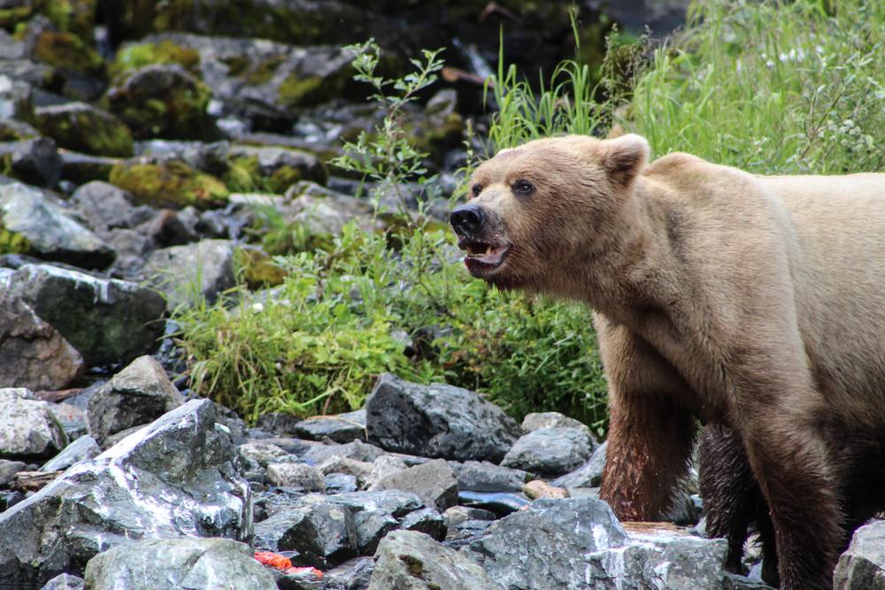 Alaska (99 of 193).jpg