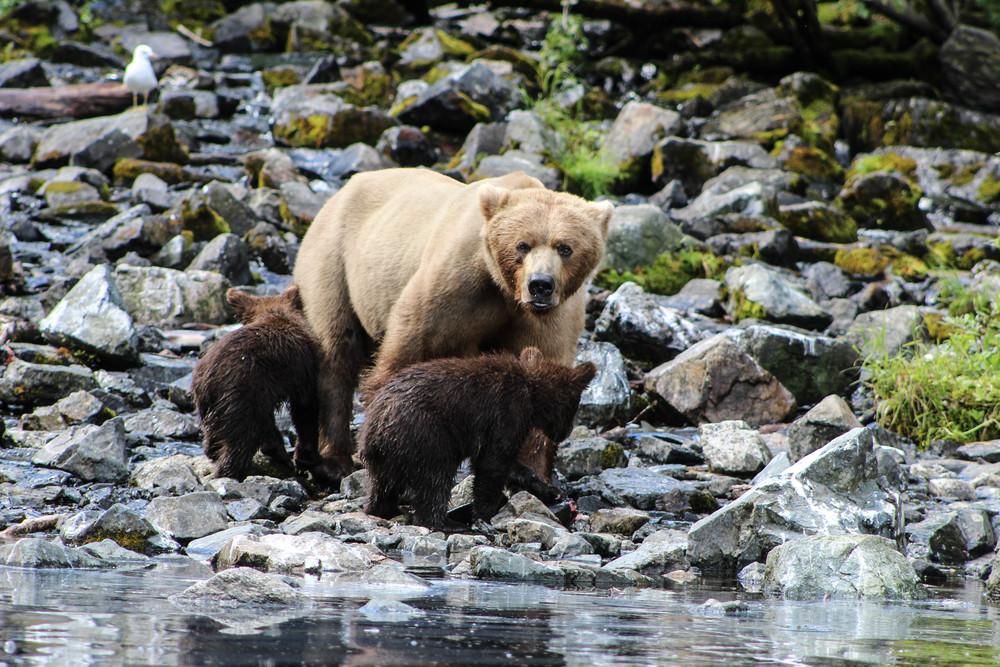 Alaska (128 of 193).jpg