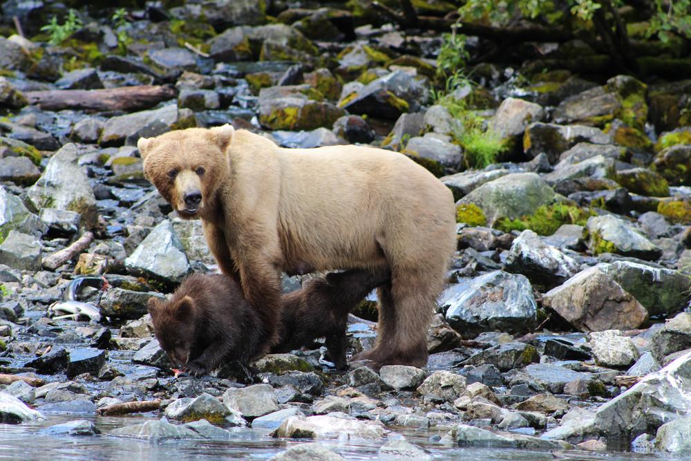 Alaska (137 of 193).jpg