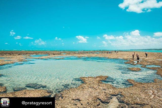 Repost from @pratagyresort using @RepostRegramApp - Desejo do fim de semana: águas mornas das piscinas naturais do Pratagy 🌞💦 #momentopratagy #reservapratagy #pratagyallinclusiveresort #resortpratagy