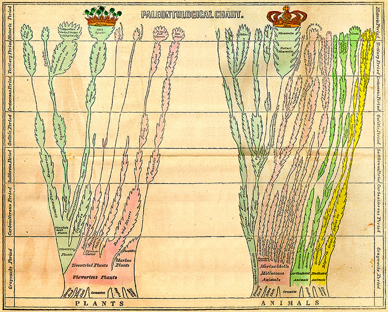 Edward Hitchcock's paleontological chart from 'Elementary Geology' (1840).