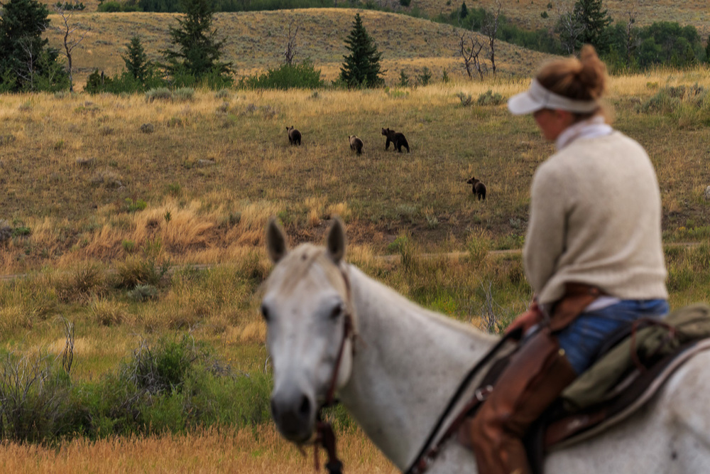 Range Rider Program - Increasing our human presence and rekindling the herd instinct in livestock