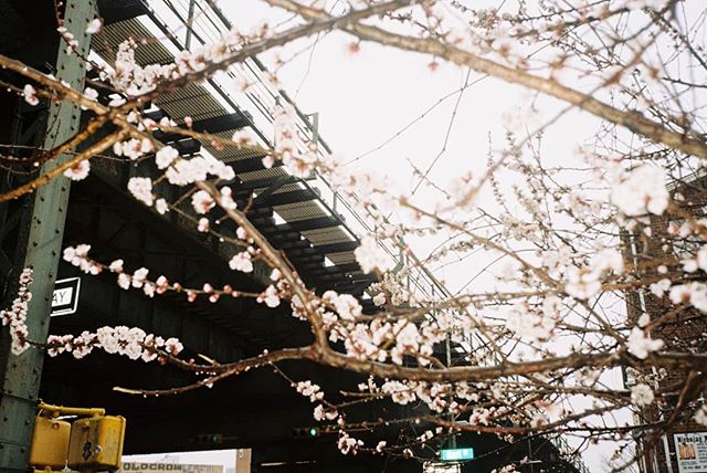 Throwback to a freezing spring #35mm