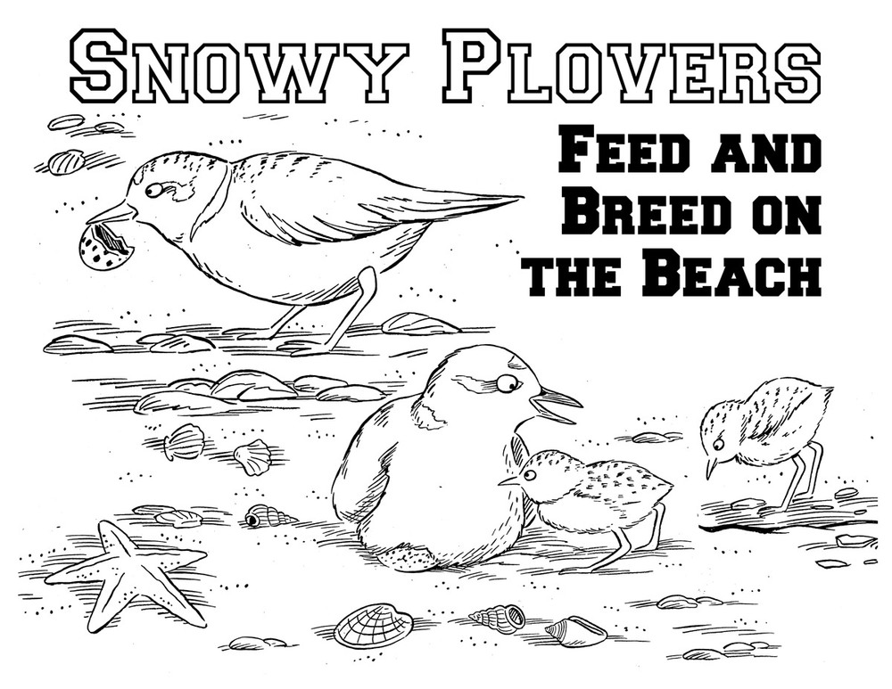 Snowy Plovers Activity Book