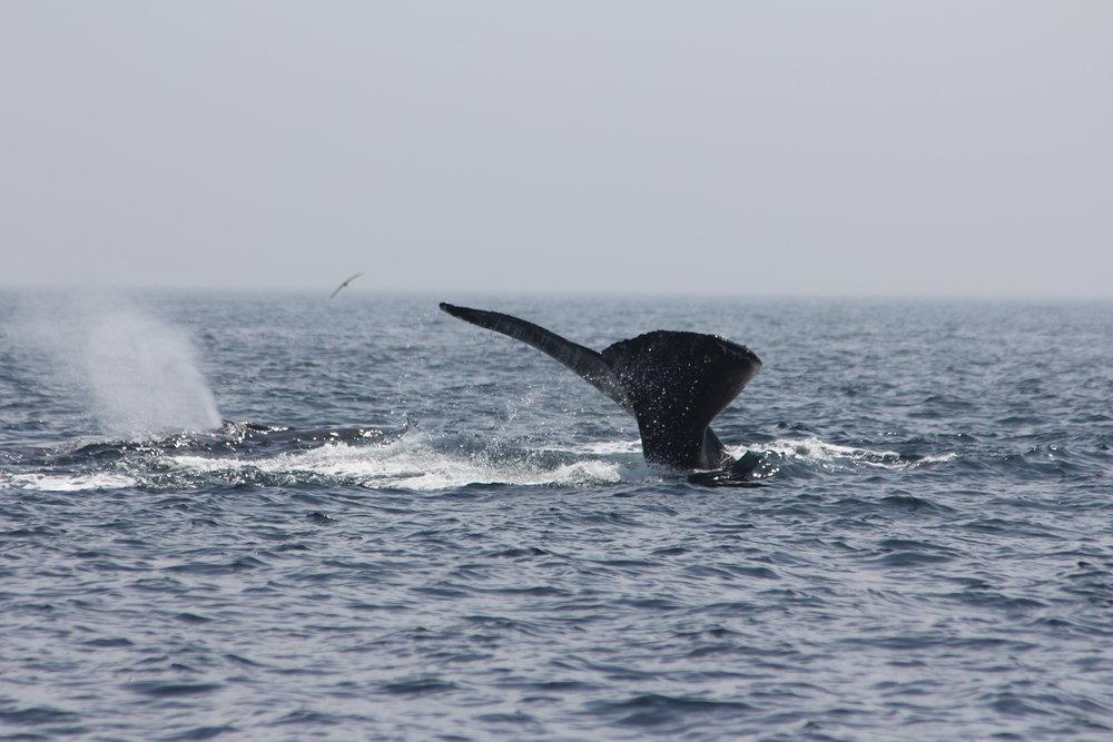 Whale_6296.JPG