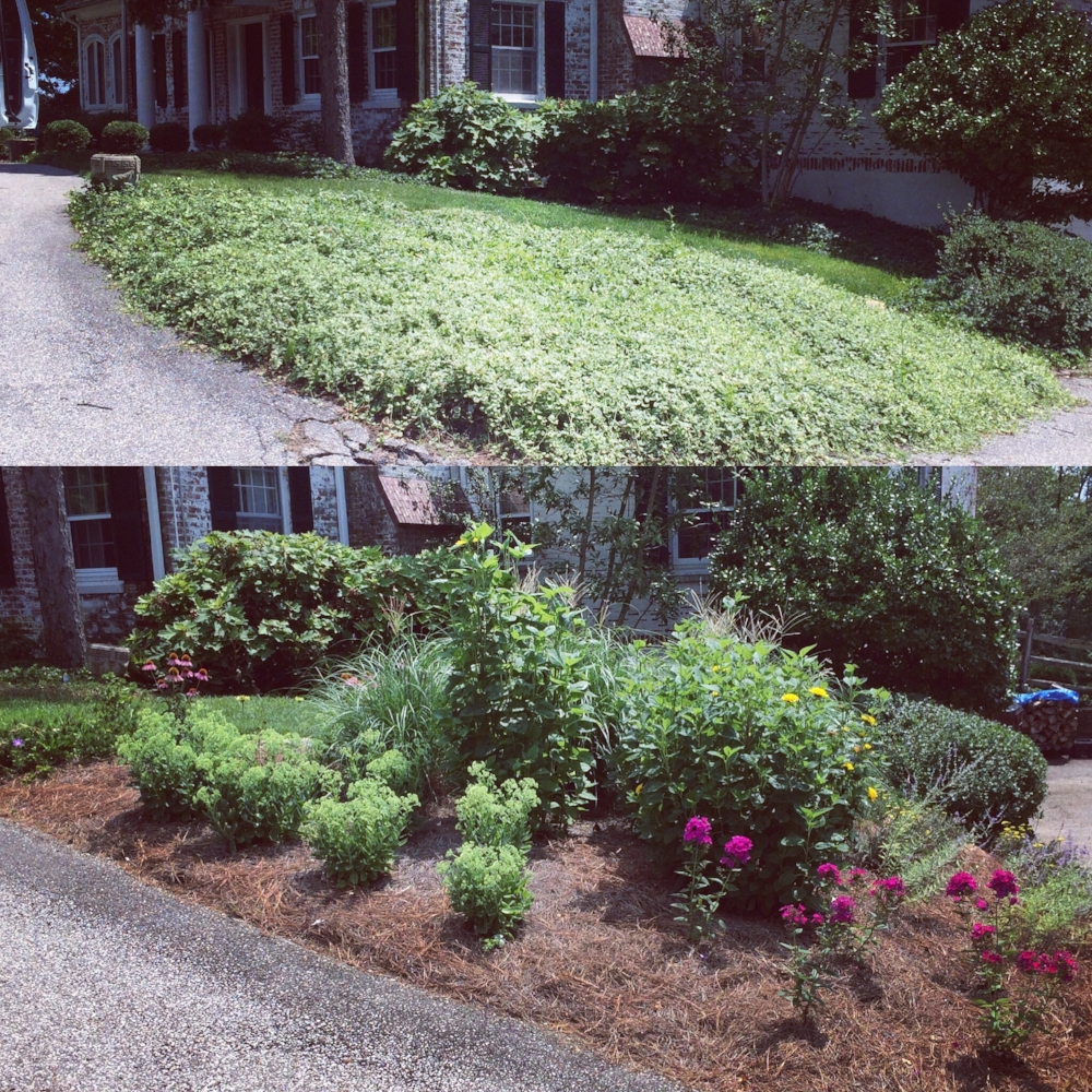 Before and after of front yard landscape