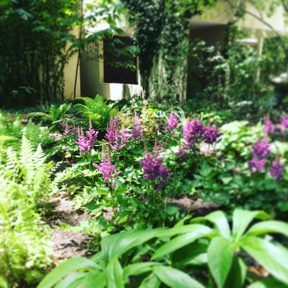 Rain garden in its second season