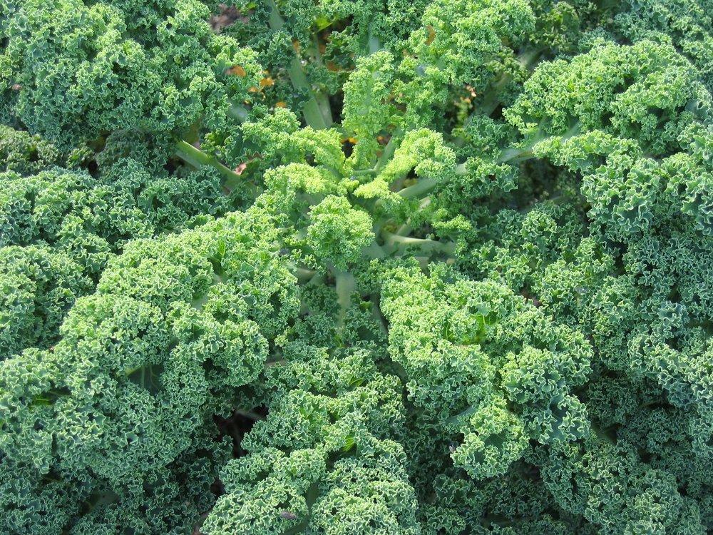 organic-cabbage-plant-1151307.jpg
