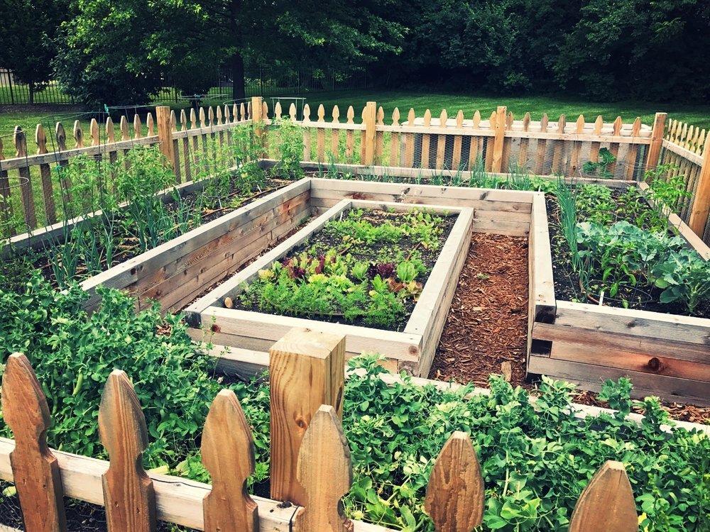 Raised bed vegetable garden