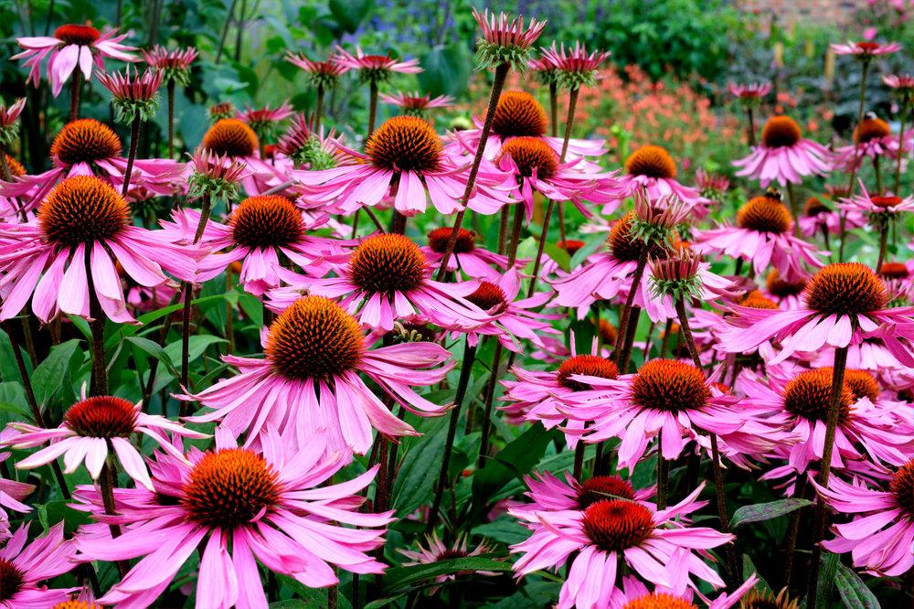 native wildflower.jpg