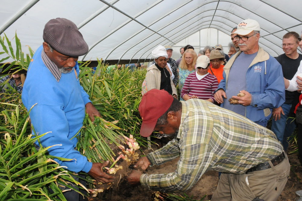 SMALL FRUITS & VEGETABLES/GREENHOUSES   Teaching the public how to benefit from growing niche crops like ginger, turmeric, green papaya, as well as providing information and technical assistance on greenhouses and high tunnels to extend the growing season