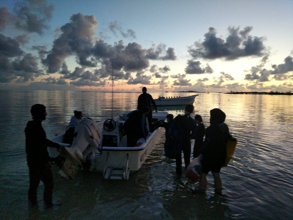 Early Morning Dive