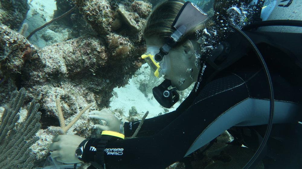 coral_restoration_forfar_bahamas.JPG