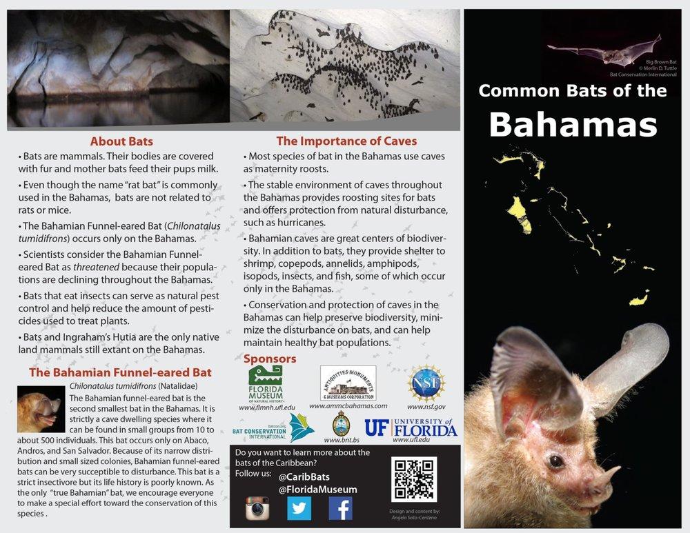 Bat-brochure-page-001.jpg