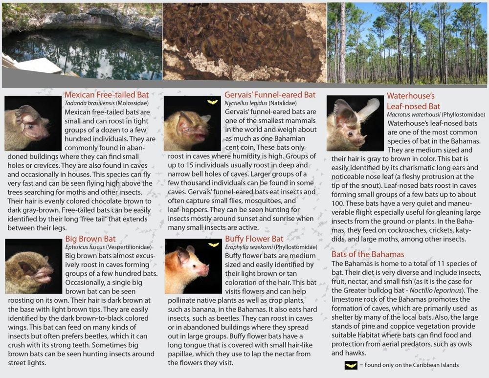 Bat-brochure-page-002.jpg