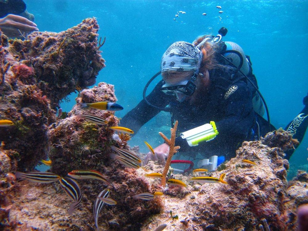 Matt corals scuba - reef rescue.jpg
