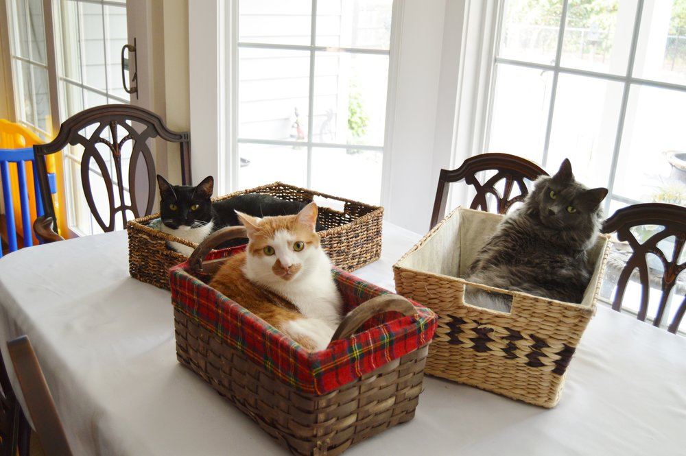 Gabriel, Koshka and Guinness in baskets