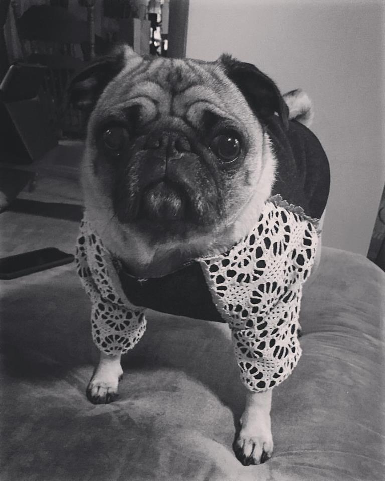 Bambi The Bohemian Chic Pug