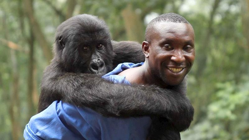 Photo: Virunga Movie