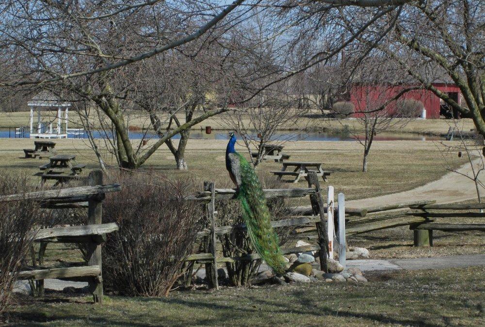 25 i amish acres.jpg