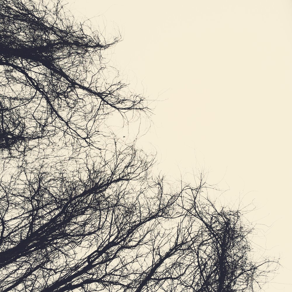 black branches.jpg